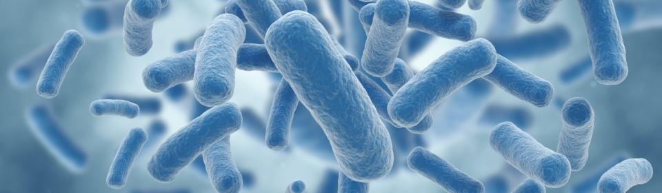bakterie-legionella